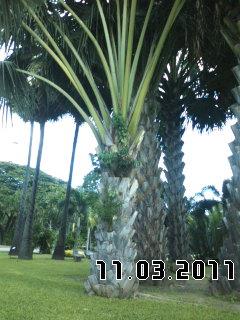 PA0_0073_20111227042006.jpg