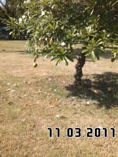 PA0_0120_20111202063305.jpg