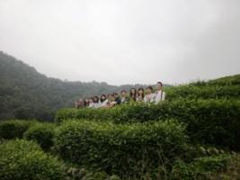 第11期茶芸師ツアー 茶園見学