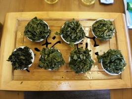 第2期 高級茶芸師 製造工程の違いの飲み比べ