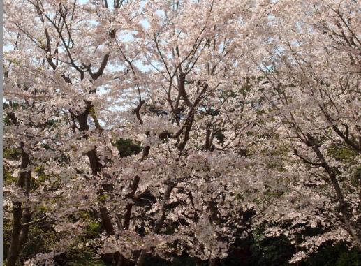 スクリーンショット(2010-04-07 15.46.00)