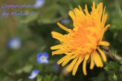 IMG_4796_yellow.jpg