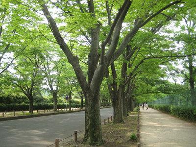 植物園への道