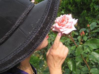 ムームーと薔薇