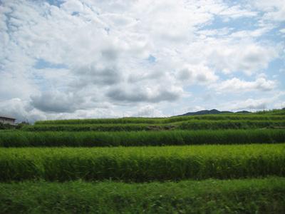 空と田んぼ