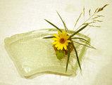 ガラスのお皿とお花