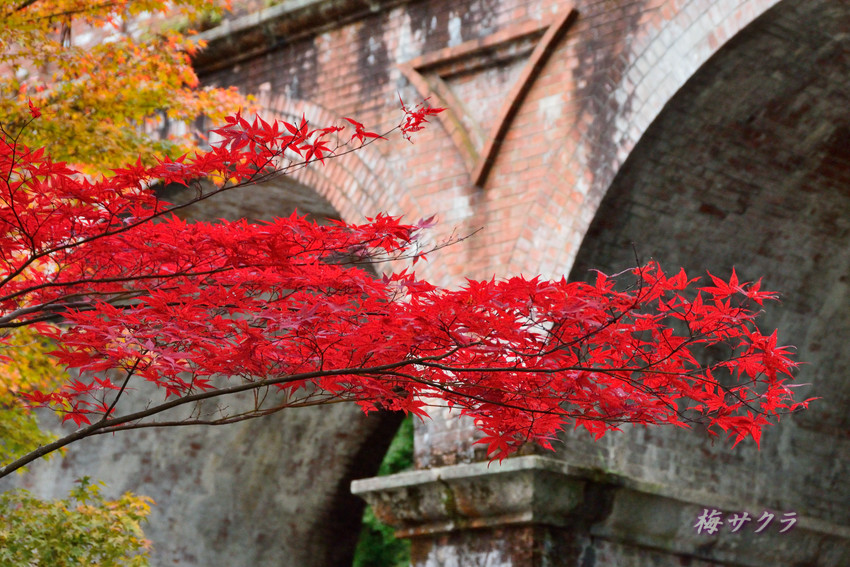 京都3(7)変更済