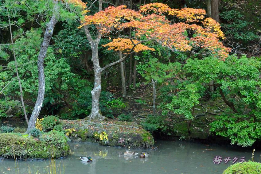 京都4(4)変更済