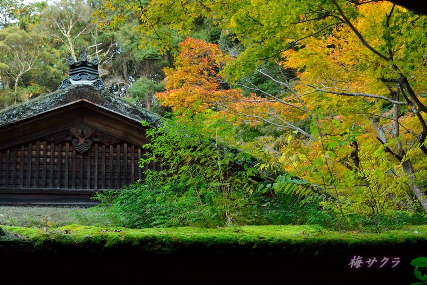京都4(8)変更済