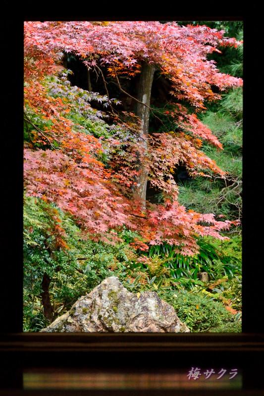 京都4(9)変更済