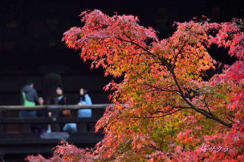 京都5(7)変更済
