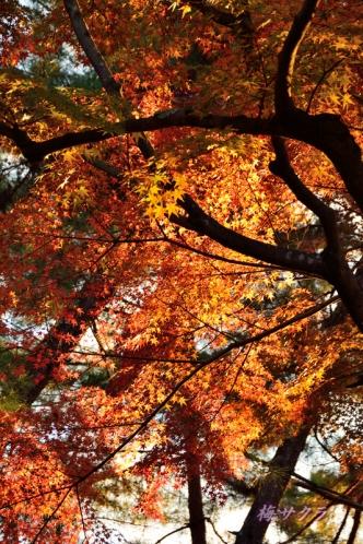 京都5(4-1)変更済