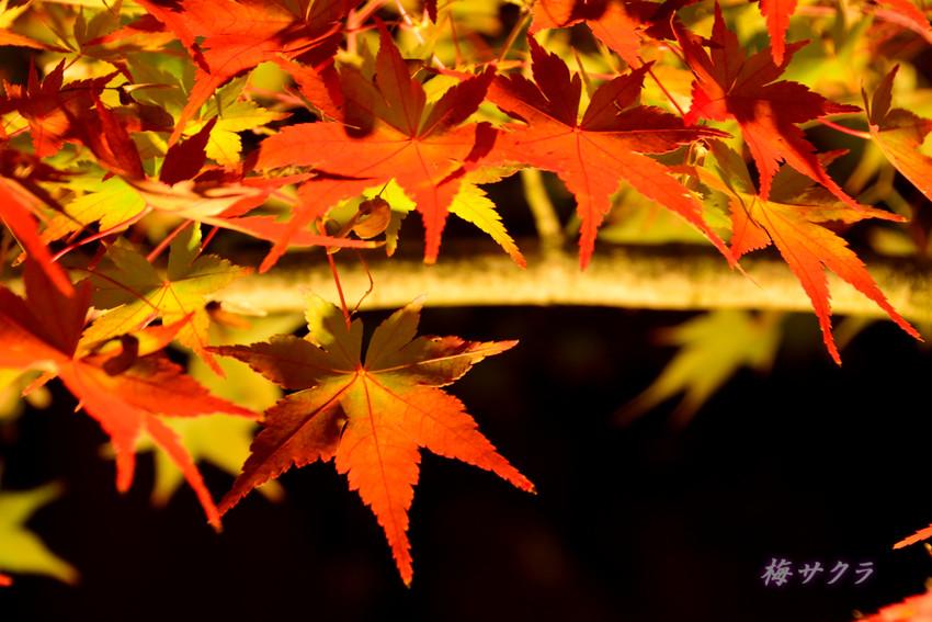 京都6(3)変更済