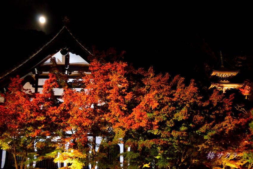 京都6(12)変更済