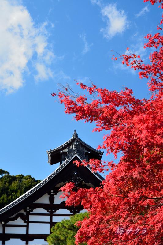 京都7(1)変更済