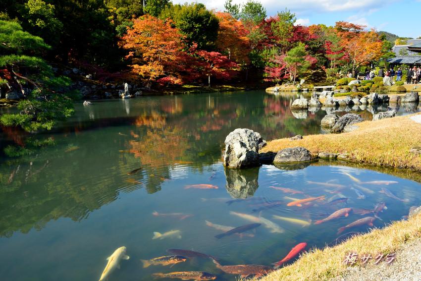 京都7(5変更済