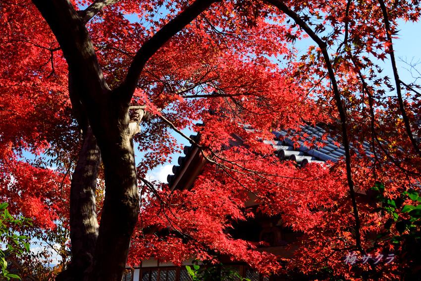 京都7-1(1)変更済