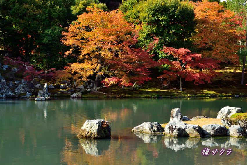 京都7(6)変更済