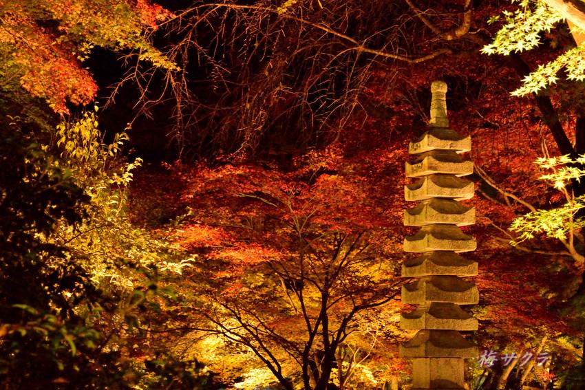 京都9(6)変更済