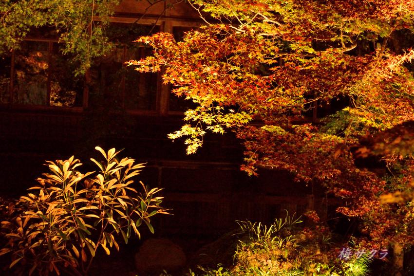 京都9(7)変更済