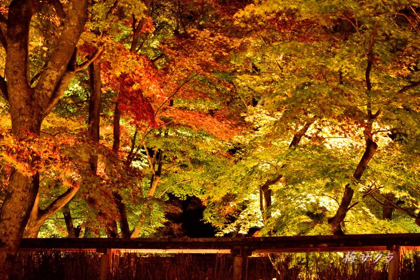 京都9(9)変更済