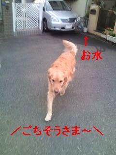 20110604180429.jpg