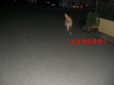 CIMG5647.jpg