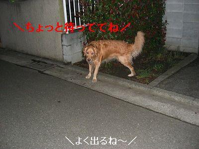 CIMG6032.jpg