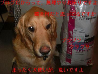 CIMG6142.jpg