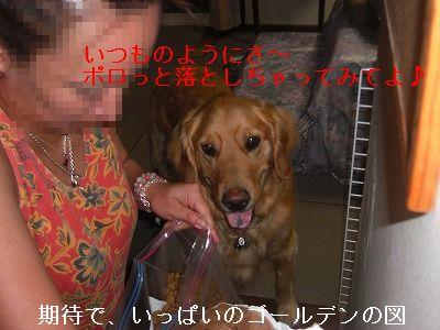 CIMG6146.jpg