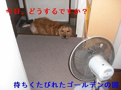 CIMG6360.jpg