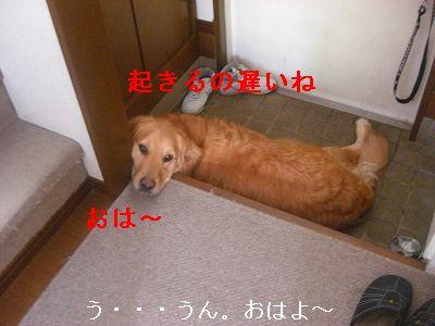 CIMG6427.jpg