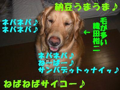 CIMG6573.jpg