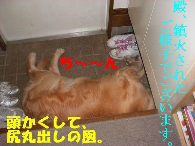 CIMG6574.jpg