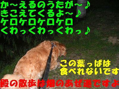 CIMG6625.jpg