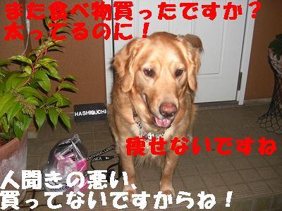 CIMG6662.jpg
