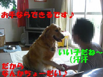 CIMG6676.jpg