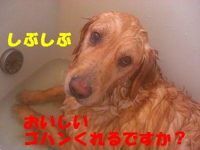 CIMG6807.jpg