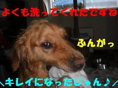 CIMG6835.jpg