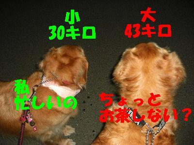 CIMG6883.jpg