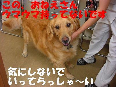 CIMG6923.jpg