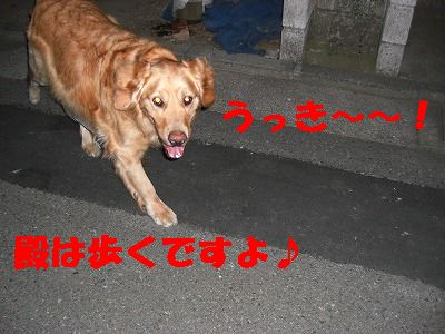 CIMG6975.jpg