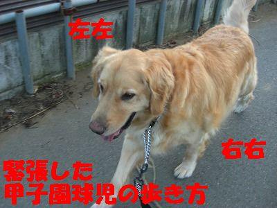 CIMG7006.jpg