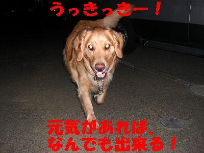 CIMG7038.jpg