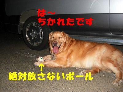CIMG7068.jpg