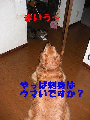 CIMG7191.jpg
