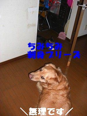 CIMG7192.jpg