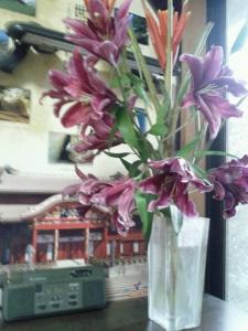 DSC_0053 花芭蕉