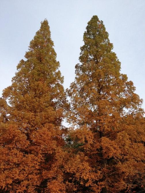 トトロっぽい木