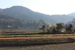 sakura201303006.jpg